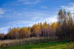 Bello paesaggio della foresta di autunno Fotografia Stock Libera da Diritti