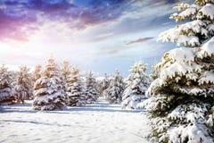 Bello paesaggio della foresta di inverno Fotografie Stock