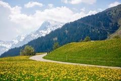 Bello paesaggio della molla nelle alpi della Svizzera con i campi del da Immagine Stock