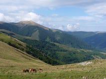 Bello paesaggio della montagna Cavalli che pascono sui precedenti dei picchi di montagna Fotografia Stock Libera da Diritti