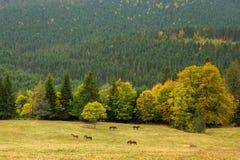 Bello paesaggio della montagna con horsesи selvaggio Fotografie Stock Libere da Diritti