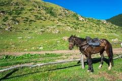 Bello paesaggio della montagna con i cavalli nella priorità alta, Kyrg Immagine Stock