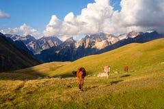 Bello paesaggio della montagna con i cavalli selvaggii in Svaneti, Georgia Immagini Stock