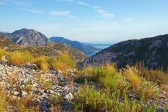 Bello paesaggio della montagna di estate Alpi di Dinaric, Montenegro Immagine Stock