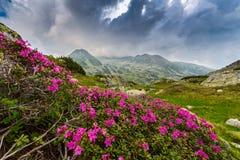 Bello paesaggio della montagna nella Transilvania Fotografia Stock Libera da Diritti