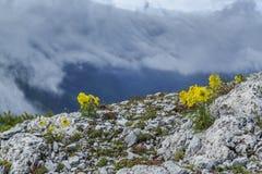 Bello paesaggio della montagna nelle alpi Immagine Stock Libera da Diritti