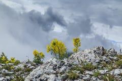 Bello paesaggio della montagna nelle alpi Fotografia Stock