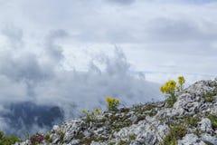 Bello paesaggio della montagna nelle alpi Fotografie Stock