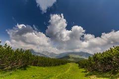 Bello paesaggio della montagna nelle alpi di Transylvanian Immagine Stock Libera da Diritti