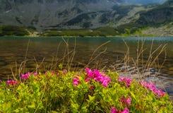 Bello paesaggio della montagna nelle alpi di Transylvanian Fotografia Stock