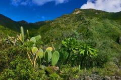 Bello paesaggio della montagna sull'isola tropicale Tenerife, canarino Fotografie Stock Libere da Diritti
