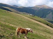 Bello paesaggio della montagna Un cavallo che pasce sui precedenti dei picchi di montagna Immagini Stock