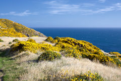 Bello paesaggio della Nuova Zelanda. fotografie stock libere da diritti