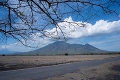 Bello paesaggio della savanna in Baluran Banyuwangi Indonesia fotografie stock libere da diritti
