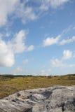 Bello paesaggio della sorgente Immagini Stock Libere da Diritti