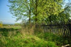 Bello paesaggio della sorgente Ciliegi dei fiori bianchi sul prato piacevole in pieno di erba verde Foresta della maestà e del ci Fotografia Stock