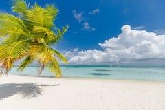 Bello paesaggio della spiaggia, foglia di palma e mare blu con la sabbia bianca, vista tropicale esotica del paesaggio immagini stock