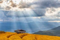 Bello paesaggio della vista del terrazzo del riso, Chiang Mai Fotografie Stock