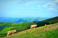 Bello paesaggio delle montagne Fotografie Stock Libere da Diritti