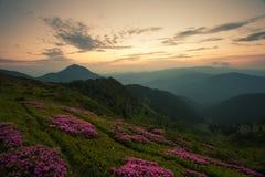 Bello paesaggio di alba di Carpathians di estate fotografia stock