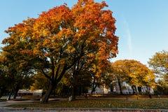 Bello paesaggio di autunno con gli alberi ed il sole gialli Sfondo naturale delle foglie cadenti fotografia stock
