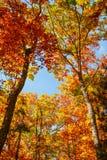Bello paesaggio di autunno con gli alberi gialli immagini stock