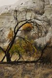 Bello paesaggio di autunno con gli alberi nel pomeriggio fotografia stock