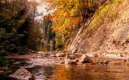 Bello paesaggio di autunno Piccolo fiume della montagna in autunno Fotografia Stock Libera da Diritti