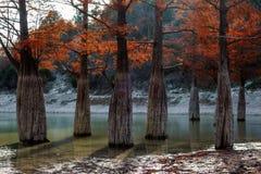 Bello paesaggio di cipresso di autunno di legno rosso mistico dell'albero Dy Anapa, Russia, Caucaso del lago Sukko fotografia stock