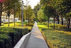 Bello paesaggio di estate con gli alberi e l'erba verde Fotografia Stock Libera da Diritti