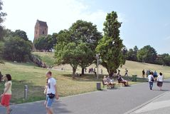 Bello paesaggio di estate con gli alberi e l'erba verde Immagine Stock