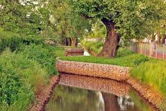 Bello paesaggio di estate con gli alberi e l'erba verde Immagini Stock Libere da Diritti