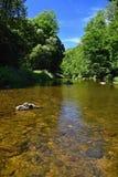 Bello paesaggio di estate con il fiume, la foresta, il sole ed i cieli blu Sfondo naturale Immagini Stock