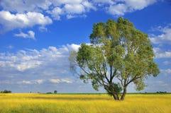 Bello paesaggio di estate con l'albero Immagini Stock Libere da Diritti