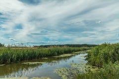 Bello paesaggio di estate con poco fiume Alta erba verde Immagini Stock Libere da Diritti