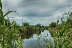 Bello paesaggio di estate con poco fiume Alta erba verde Immagine Stock Libera da Diritti