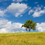 Bello paesaggio di estate con un albero solo Fotografia Stock Libera da Diritti