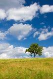 Bello paesaggio di estate con un albero solo Fotografie Stock