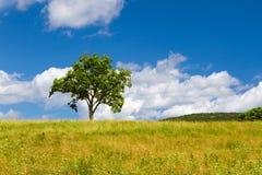 Bello paesaggio di estate con un albero solo Immagine Stock