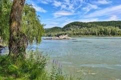 Bello paesaggio di estate del fiume Katun, Russia della montagna Fotografia Stock