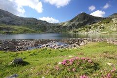 Bello paesaggio di estate delle montagne carpatiche Fotografia Stock Libera da Diritti