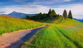 Bello paesaggio di estate nelle montagne Fotografia Stock Libera da Diritti