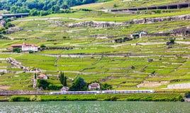 Bello paesaggio di estate terrazzi della vigna di Lavaux, del lago Lemano ed alpi con i treni che vanno vicino, svizzero Riviera, Fotografia Stock Libera da Diritti
