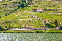 Bello paesaggio di estate terrazzi della vigna di Lavaux, del lago Lemano ed alpi con i treni che vanno vicino, svizzero Riviera, Fotografie Stock Libere da Diritti