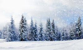 Bello paesaggio di inverno Immagine Stock