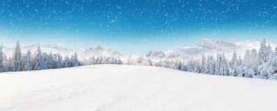 Bello paesaggio di inverno con gli alberi Fotografia Stock Libera da Diritti