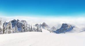 Bello paesaggio di inverno con gli alberi Fotografia Stock