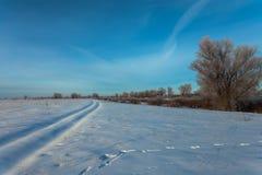 Bello paesaggio di inverno con gli alberi innevati Fotografia Stock Libera da Diritti