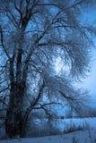 Bello paesaggio di inverno con gli alberi innevati Immagine Stock Libera da Diritti