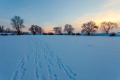 Bello paesaggio di inverno con gli alberi innevati Fotografia Stock